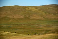 Landscape in Mongolia Stock Image