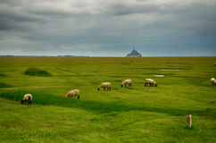 Landscape with Mont Saint Michel on background Stock Photo