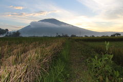 Landscape. Montain view from harvested ricefields Royalty Free Stock Photography