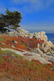 Landscape of Monterey 17 Mile Drive, California Stock Photos