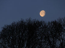 Landscape with the Moon. Above trees Stock Photos