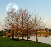 Landscape with moon Royalty Free Stock Image