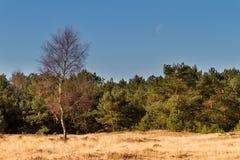 Landscape moon Stock Images
