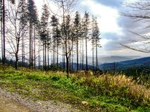 Landscape in Moravian-Silesian Beskids in northern Czechia. Photo taken near city of Mosty u Jablunkova during sunny November day, in 2008. Road and trees in Royalty Free Stock Images