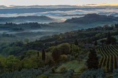 Landscape with a morning fog and vineyards Stock Image