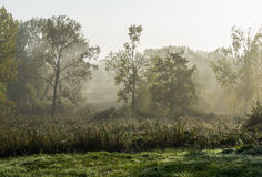 Landscape in morningdust Royalty Free Stock Images