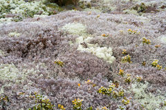 Landscape of moss Royalty Free Stock Photo