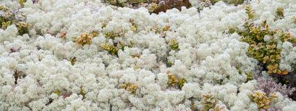 Landscape of moss Stock Photo
