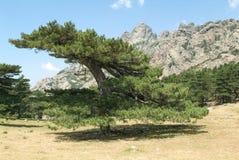 Landscape of mount Bavella on the island of Corsica Stock Photo