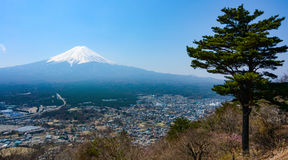 Landscape of Mount Fuji volcano and a lone pine tree in Japan Stock Photo