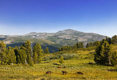 Landscape of the Mountain Altai, Siberia Royalty Free Stock Images