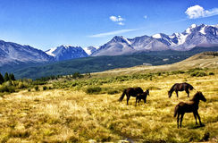 Landscape mountain Altai stock image