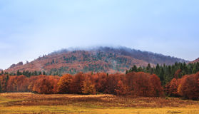 Landscape of mountain autumn  with colorful and mist forest. Stock Image