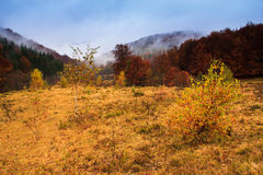 Landscape of mountain autumn  with colorful and mist forest. Royalty Free Stock Images