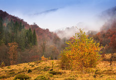 Landscape of mountain autumn  with colorful and mist forest. Royalty Free Stock Photo