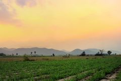 Landscape of Mountain and cane farm View in countries Thailand at sunset. Image royalty free stock photos