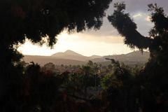 Mountain through the Trees in Gran Canaria stock images