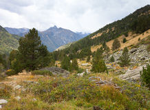 Landscape. Mountain, forest, clouds, dry grass Royalty Free Stock Photo
