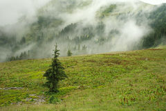 Landscape mountain forest on a rainy day covered in haze Stock Photo