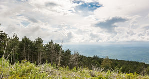 Landscape of a mountain forest with trees broken by wind in fron Royalty Free Stock Images