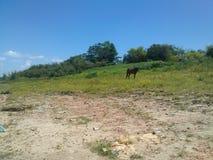 landscape mountain horse alimetandose pasture Stock Images