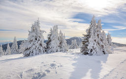 Landscape of the mountain Kopaonik in the winter, Serbia royalty free stock image