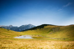 Landscape of a mountain lake and animals around him Stock Image
