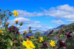 Landscape mountain nature flowers summer Stock Photos