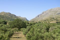 Landscape, Mountain and Olive Groves on Crete Royalty Free Stock Photos
