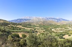 Landscape, Mountain and Olive Groves Royalty Free Stock Image