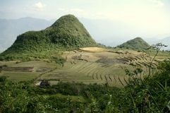 Landscape of mountain rice Stock Image