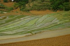 Landscape of mountain rice. In northern Vietnam, rice cultivation is difficult. For millennia men have turned the mountains and create their rice trellises Stock Photos