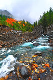 Landscape, mountain and river Altai, Russia Stock Photos