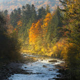 Landscape mountain river in autumn forest at sunlight. Stock Photo
