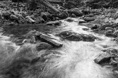 Landscape mountain river in autumn forest. View of the stony rapids. Black and white photo. Stock Photos