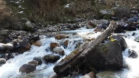Forest and river in the mountains. stock video footage