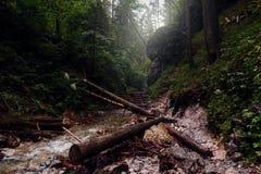 Landscape mountain river Sucha Bela Slovak Paradise Slovakia. Landscape with mountain river. Sucha Bela, Slovak Paradise, Slovakia royalty free stock photography