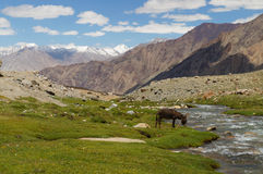 Landscape with mountain, rock and stream at Ladakh,  India Royalty Free Stock Images