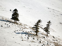 Landscape of mountain with snow Royalty Free Stock Images