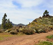 Landscape of mountain in spring, Gran canaria island. Natural landscape of Gran canaria Royalty Free Stock Photography
