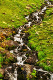 Landscape with a mountain stream Royalty Free Stock Images