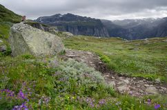 Mountain landscape of Hardangervidda National Park in Norway. Landscape with mountain trail and summer flowers in Hardangervidda National Park, Norway Royalty Free Stock Image