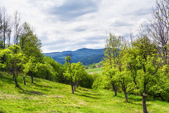 Mountain apple orchards Royalty Free Stock Images