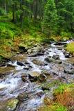 Landscape with mountainous rapid river. Landscape with speed water in mountainous river Stock Images
