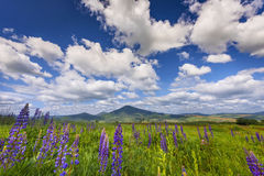 Landscape in the mountains. Beautiful summer landscape in the mountains. Green meadow Stock Photography