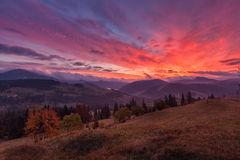Landscape in the mountains with dramatic sky. Mountain landscape with fir forest, sunset with red clouds Stock Photos
