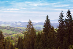 Landscape of a mountains with fir-tree and green valley Royalty Free Stock Photography