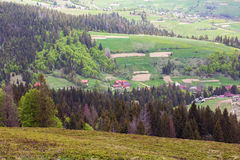 Landscape of a mountains with fir-tree and green valley Royalty Free Stock Photos