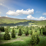 Landscape of mountains and forest Stock Photos