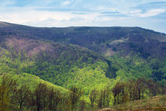 Landscape of mountains with green trees Stock Photos